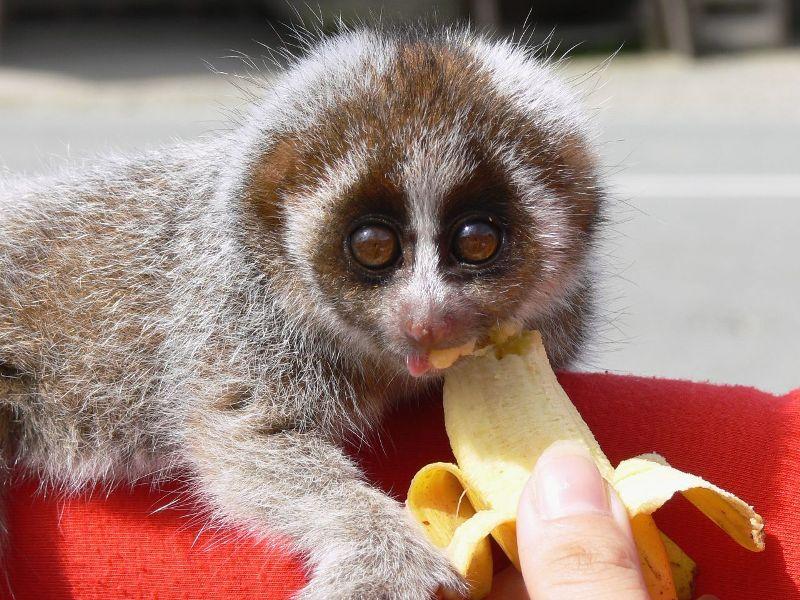 Cele mai dragute animale din lume, intr-un pictorial adorabil - Poza 6