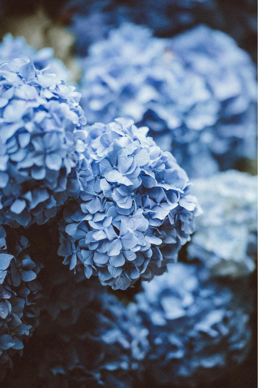 Cele mai frumoase flori din lume, intr-un pictorial de exceptie - Poza 3