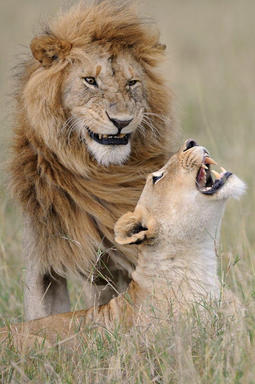 Comedy Wildlife Photography: Cele mai amuzante poze din salbaticie - Poza 5