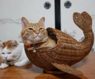 8 poze cu pisici inghesuite prin cele mai ciudate locuri