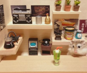 Lumea miniaturala a hamsterilor, in poze haioase