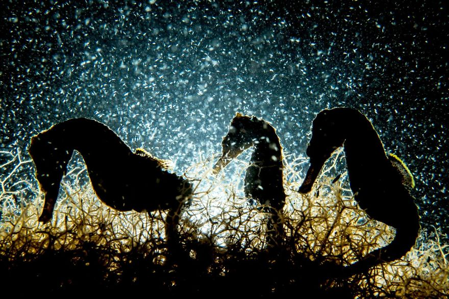 Fotografii superbe din uimitoarea lume subacvatica - Poza 10