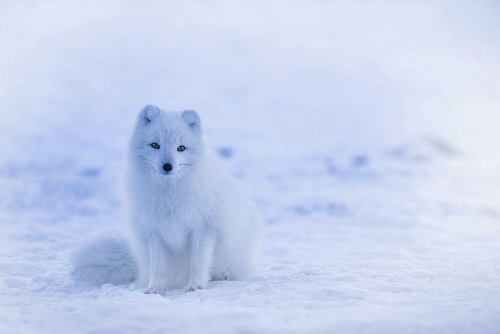 Cele mai frumoase ipostaze ale iernii, in poze sublime - Poza 7