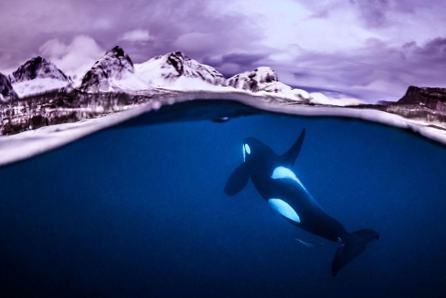 Fotografii superbe din uimitoarea lume subacvatica - Poza 17