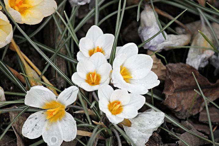 Gingasia florilor de primavara in poze superbe - Poza 7