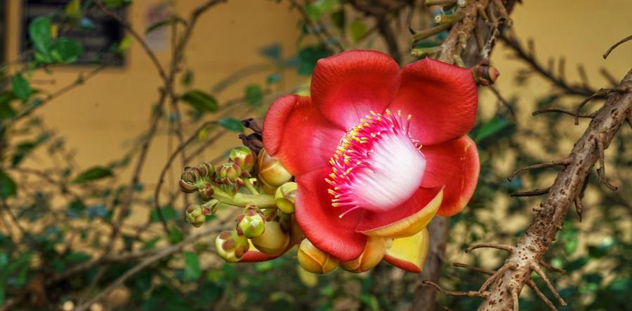 Splendoarea copacilor infloriti in poze superbe - Poza 12