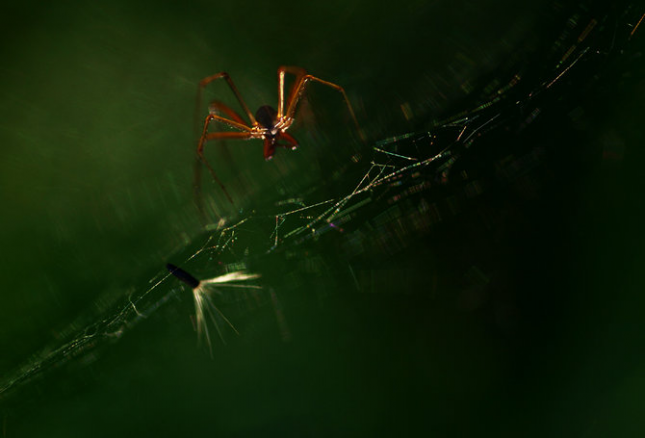 Natura la control, in 40 de poze - Poza 40