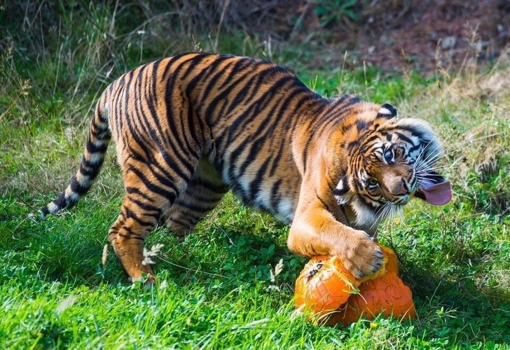 20+ Animale poznase care se stramba in fata aparatului foto - Poza 18