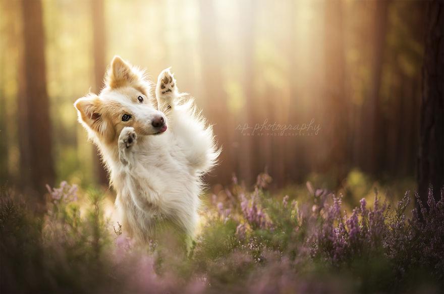 Bucuria sufletului frumos de caine, in poze superbe - Poza 17