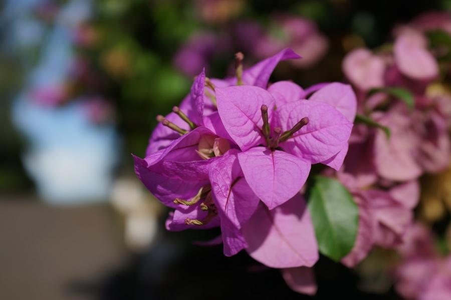 Cele mai frumoase flori din lume, intr-un pictorial de exceptie - Poza 29
