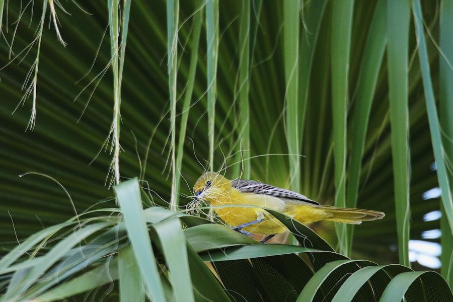 Audubon 2019: Splendoarea pasarilor, in cele mai frumoase fotografii - Poza 7