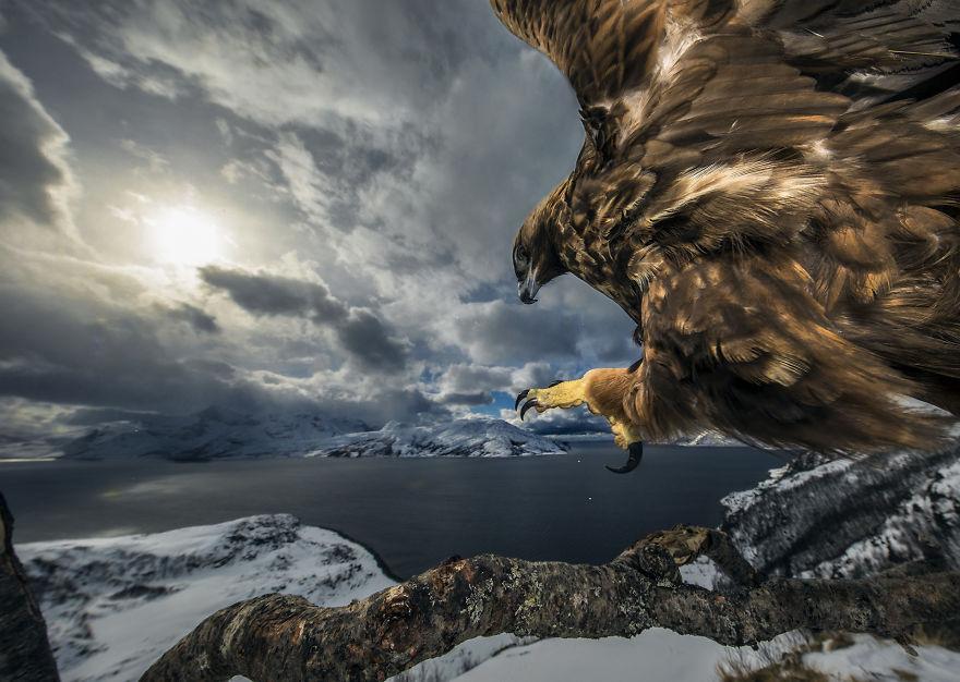 Cele mai bune fotografii cu si despre natura din 2019 - Poza 7