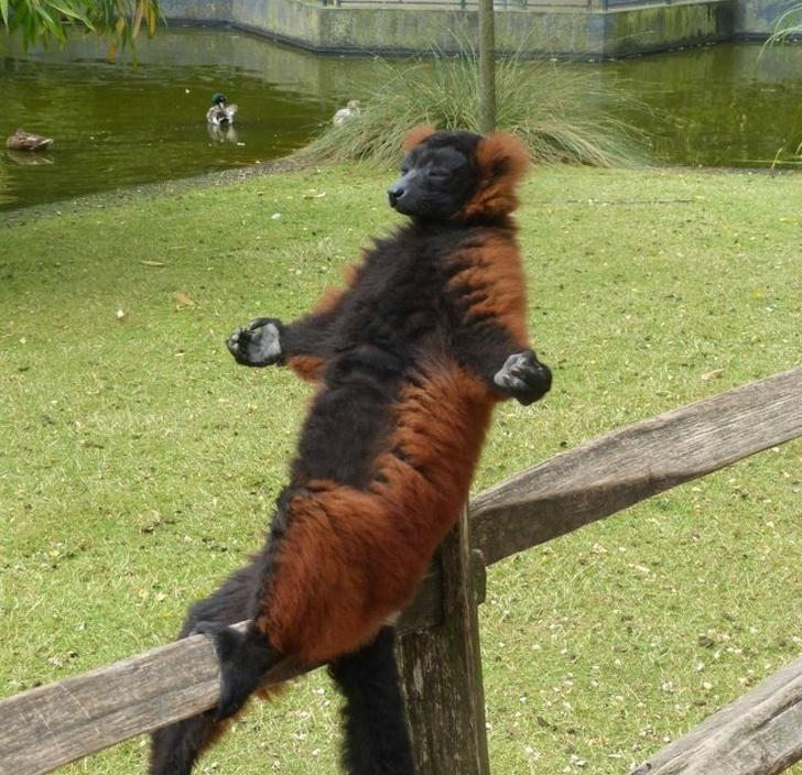 Cele mai adorabile animale, in cele mai bizare ipostaze - Poza 15