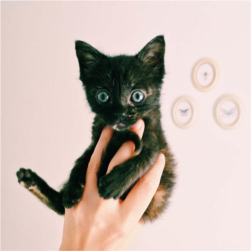 Cele mai frumoase poze cu pisici - Poza 24