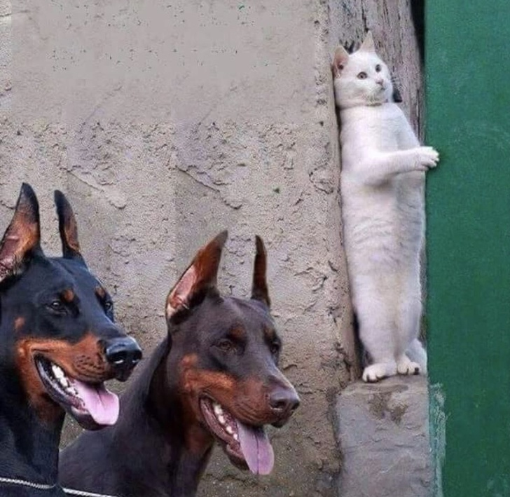 Pisicile chiar au simtul umorului. Avem dovada! - Poza 1