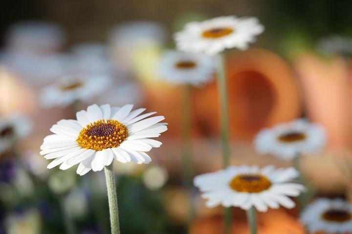 Gingasia florilor de primavara in poze superbe - Poza 3