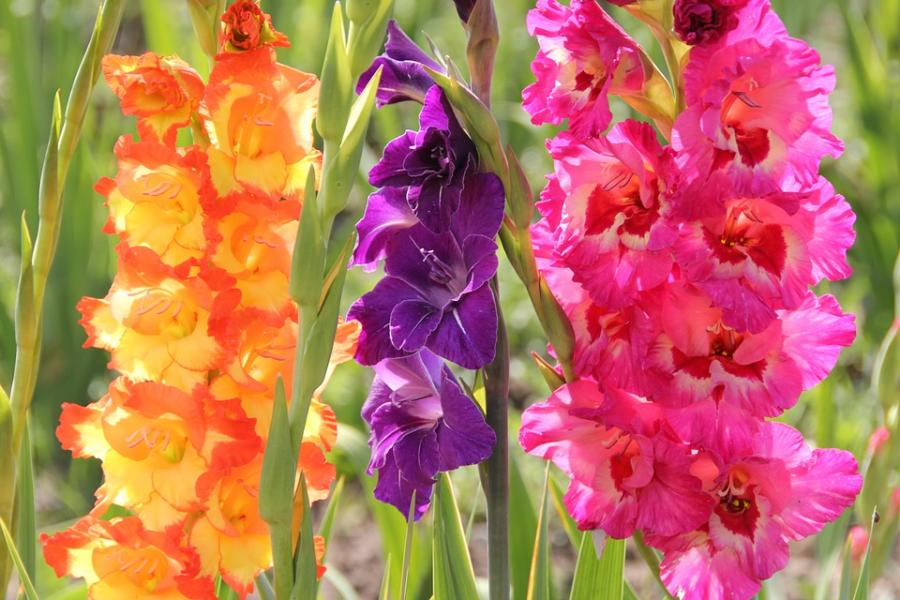 Cele mai frumoase citate despre flori - Poza 2