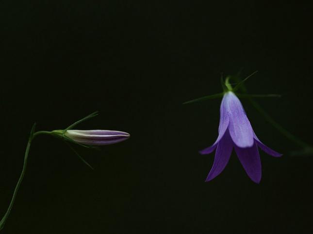 Natura la control, in 40 de poze - Poza 20
