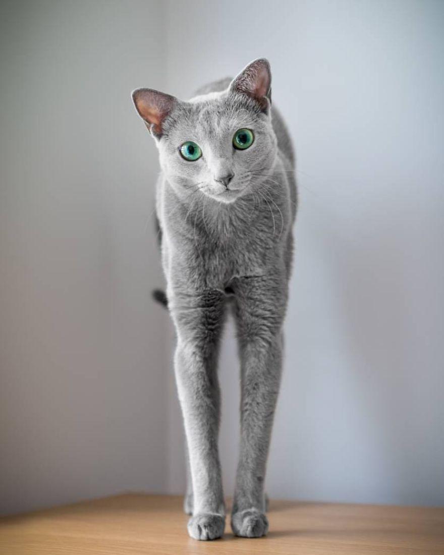 Pisicutele cu cei mai frumosi ochi din lume, in poze superbe - Poza 10