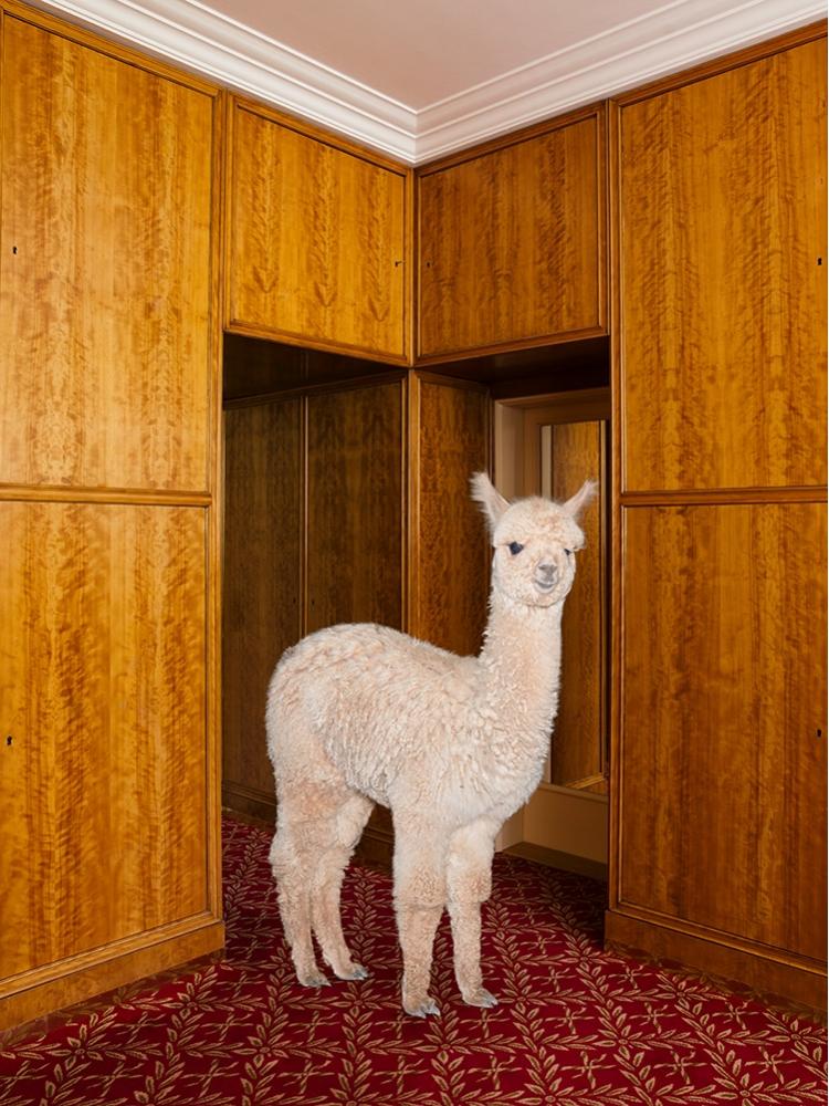 Cele mai zambarete animale din lume, in circumstante elegante - Poza 6