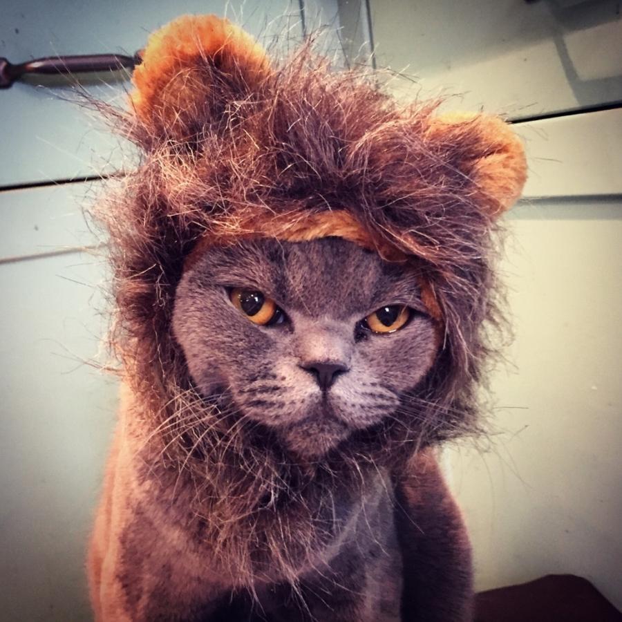 20+ Pisici costumate de Halloween, in poze hilare - Poza 6