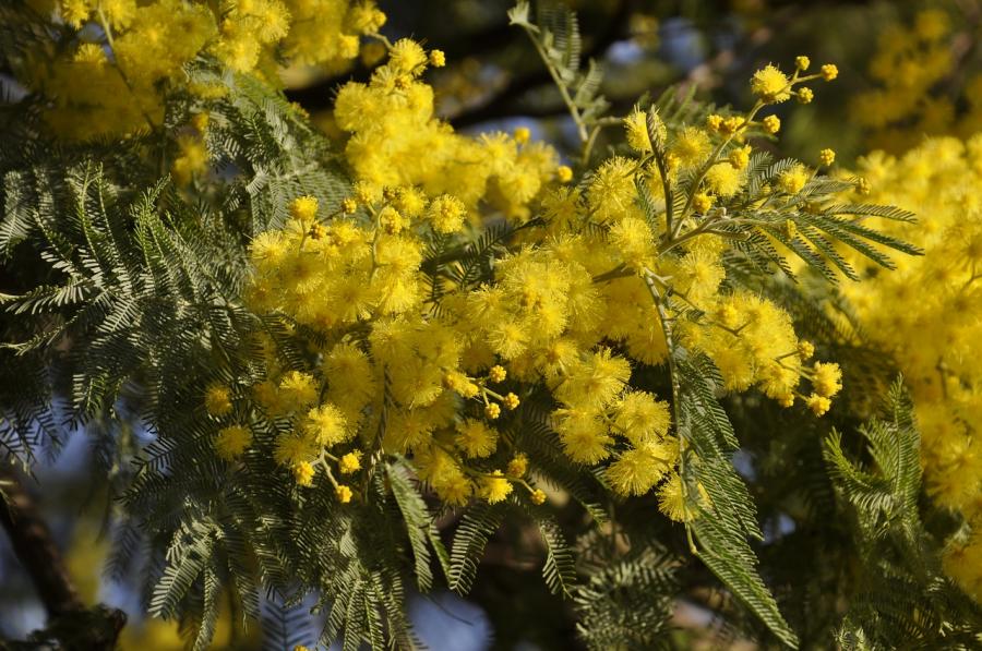 Cele mai frumoase flori din lume, intr-un pictorial de exceptie - Poza 19