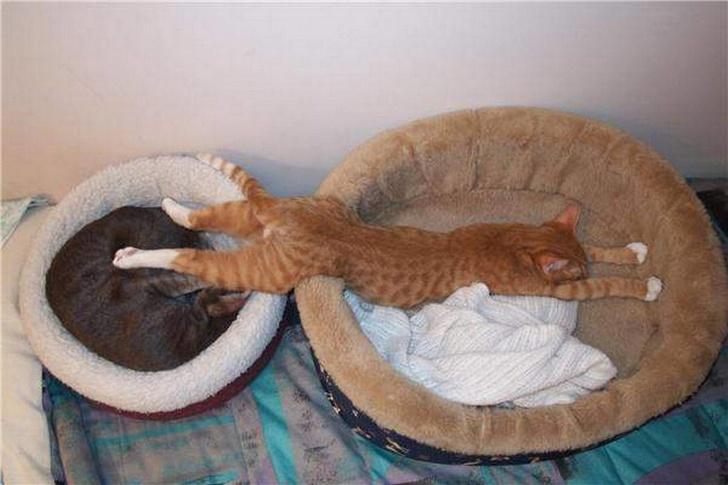 Pisicile chiar au simtul umorului. Avem dovada! - Poza 15