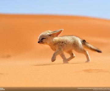 Concurs National Geographic Traveler 2013: Fotografii cu animale