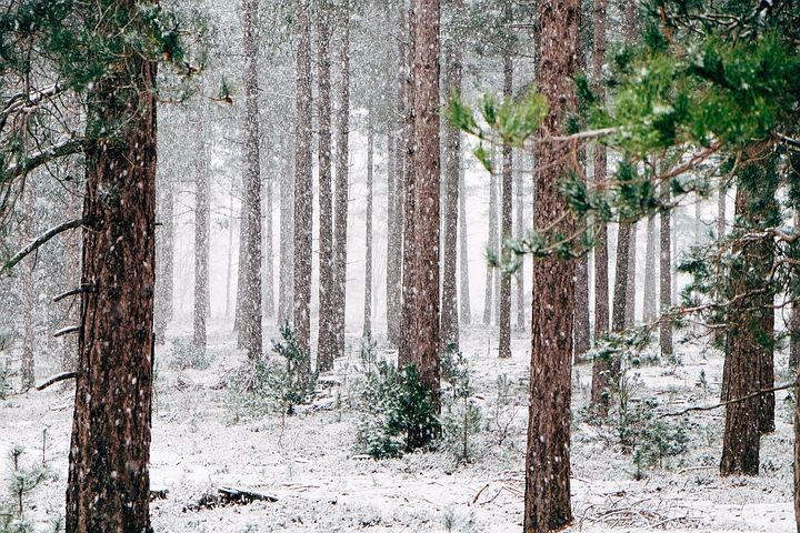 Cele mai frumoase ipostaze ale iernii, in poze sublime - Poza 3