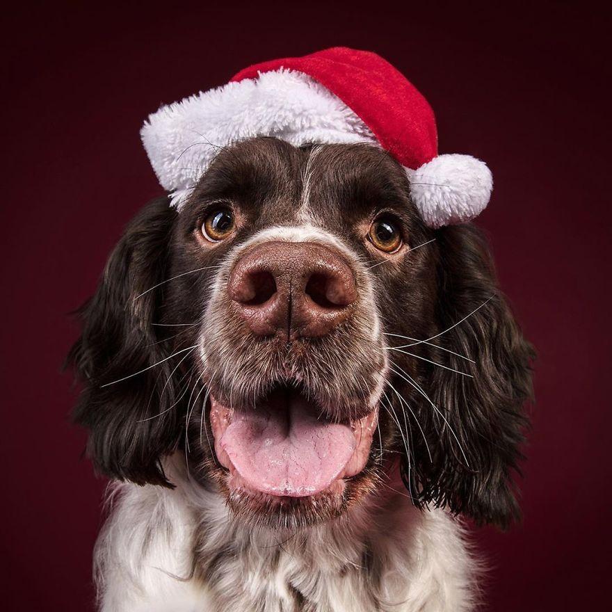 Cel mai bun prieten al omului, in ipostaze festive - Poza 10