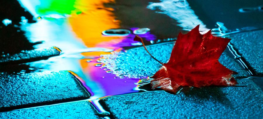 Nuantele picaturilor de ploaie, in poze fermecatoare - Poza 7