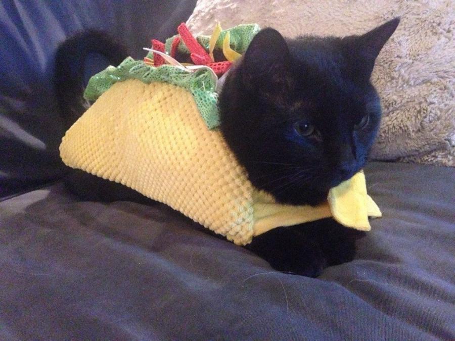 20+ Pisici costumate de Halloween, in poze hilare - Poza 15