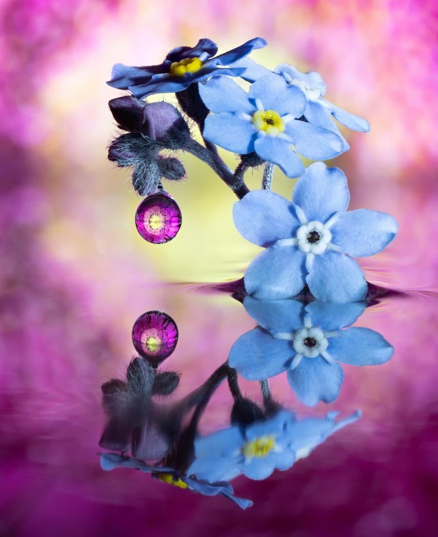 Cum se oglindeste frumusetea naturii in picaturi limpezi de apa - Poza 9