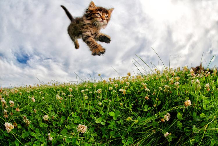 Pisicute adorabile surprinse in aer - Poza 5