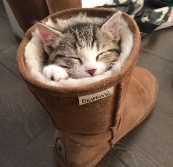 20+ Pisici adorabile si somnul lor nefiresc - Poza 16