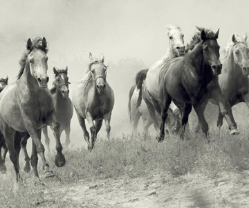 Colectionarul de cai
