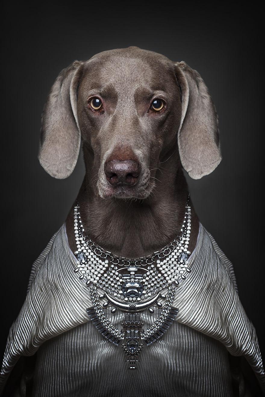 Cainii deghizati in oameni, de Sandra Muller - Poza 9