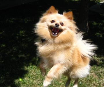 8 caini incredibil de fericiti