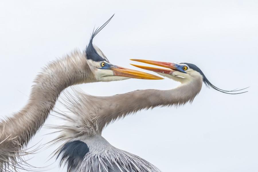 Audubon 2019: Splendoarea pasarilor, in cele mai frumoase fotografii - Poza 3