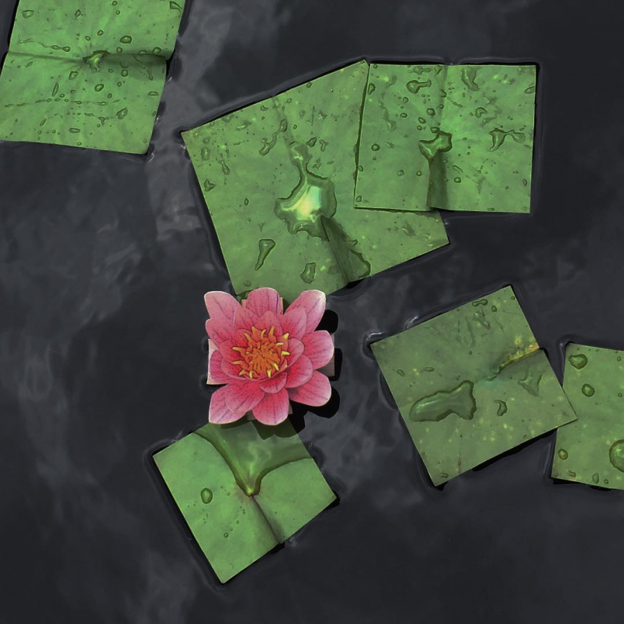 Flori patrate: Cand geometria naturii devine relativa - Poza 6