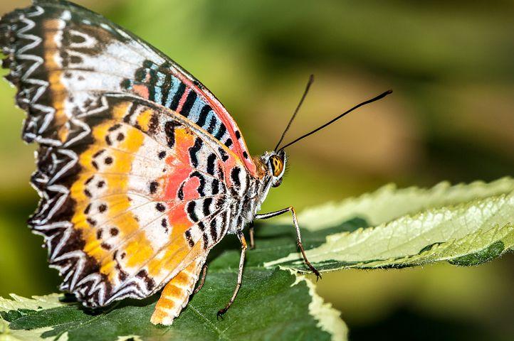 Cei mai frumosi fluturi din lume, in poze spectaculoase - Poza 30