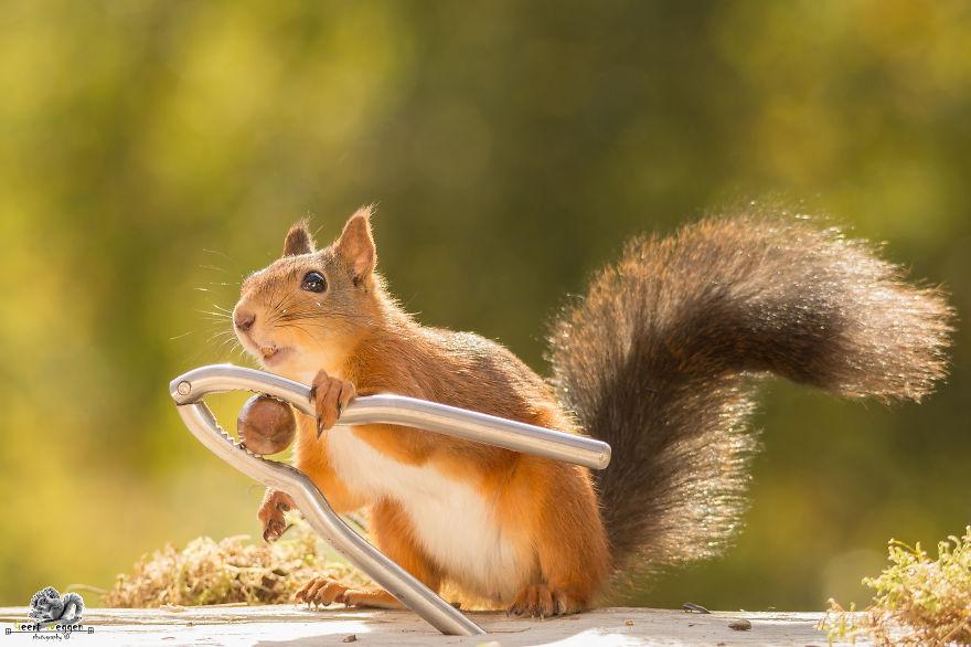 Frumoasa poveste cu veverite roscate, intr-un pictorial adorabil - Poza 20