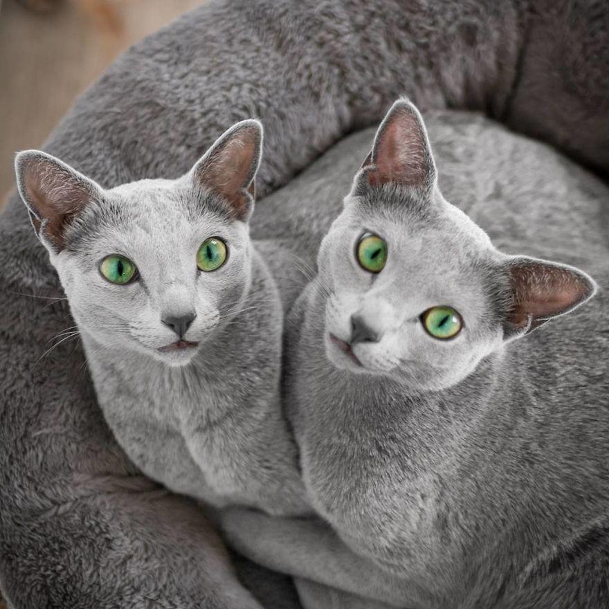 Pisicutele cu cei mai frumosi ochi din lume, in poze superbe - Poza 5