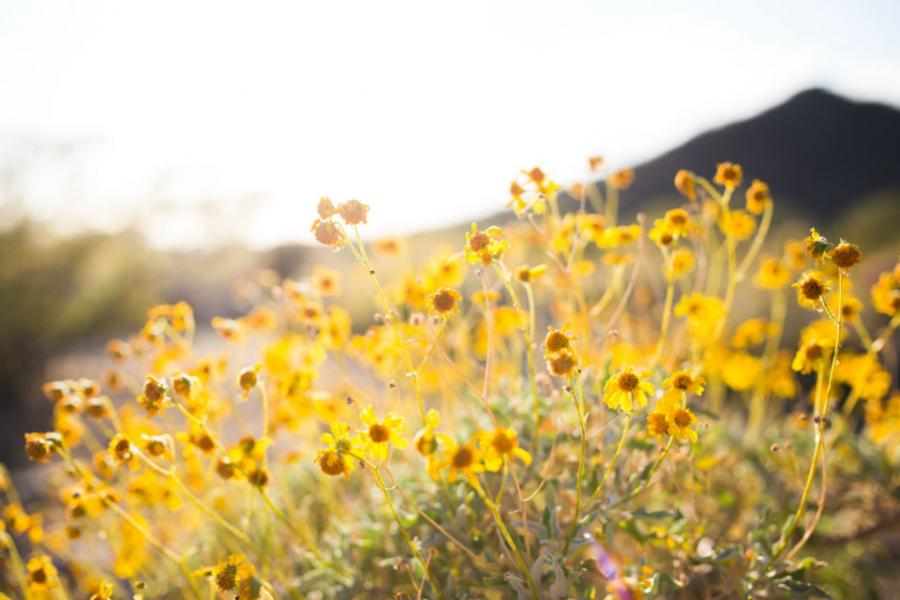 Peisaje primavara superbe care iti vor umple sufletul cu bucurie - Poza 5
