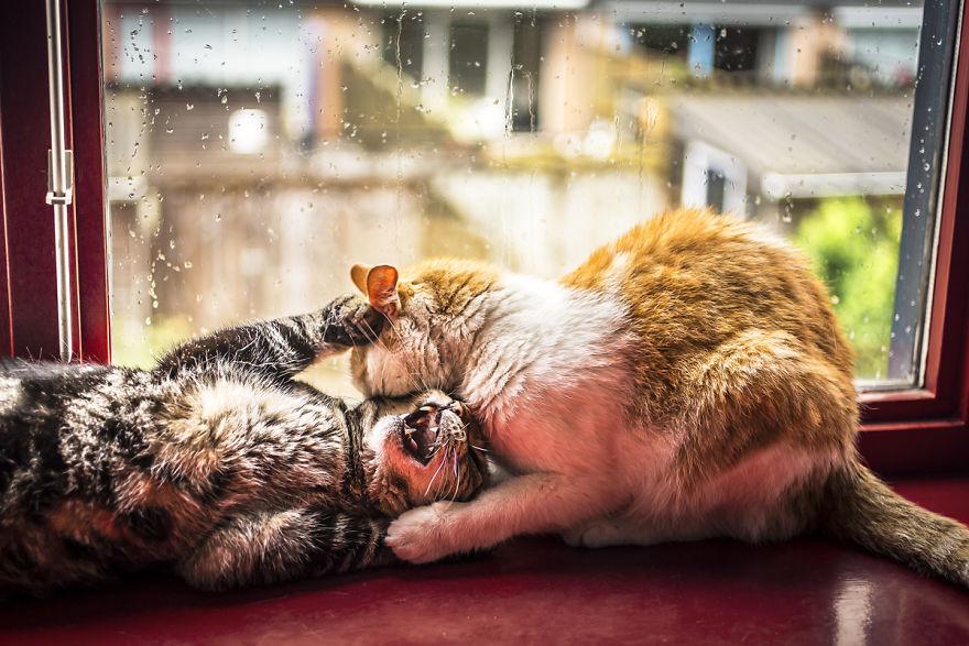 Pisicile care adora ploaia - Poza 8