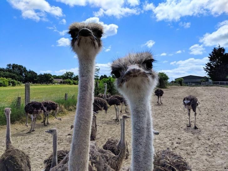 20+ Animale poznase care se stramba in fata aparatului foto - Poza 9