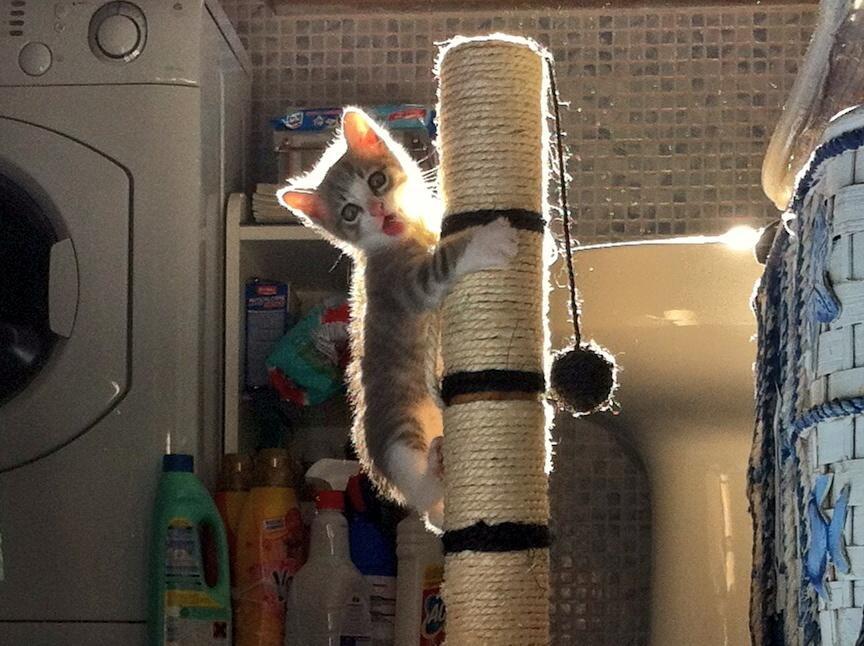 Cele mai dragute pisici din lume, in poze adorabile - Poza 14