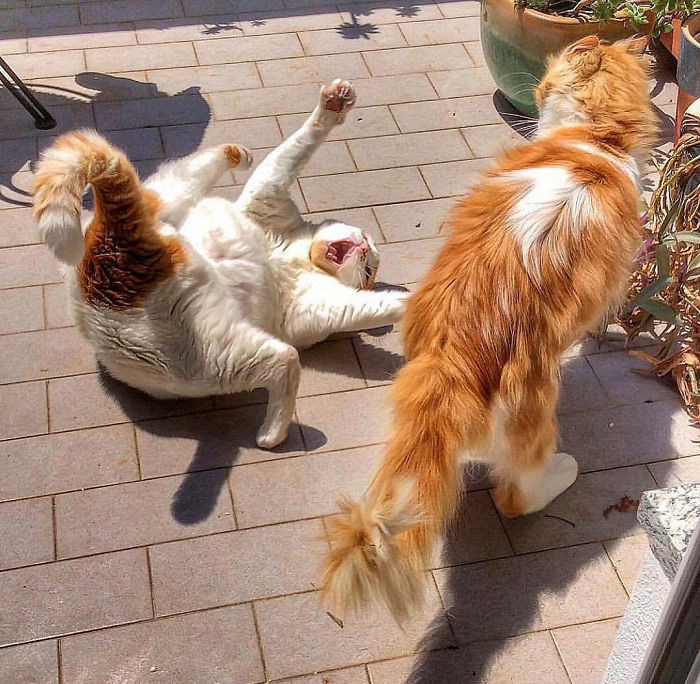 Viata de pisica, in poze adorabile - Poza 3