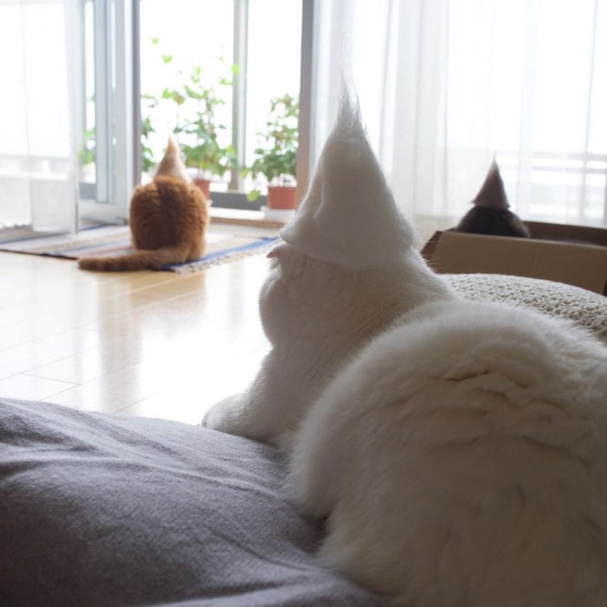 Cochete si haioase: Pisici cu palarii blanoase - Poza 12