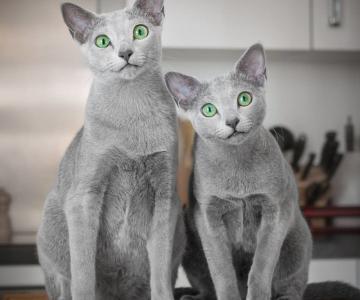 Pisicutele cu cei mai frumosi ochi din lume, in poze superbe